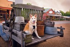 Pet-Friendly Leiper's Fork | Nashville Paw