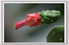 La fotografía de flores es muy bella, pero si queremos darle un toque especial y hacer una imagen extraordinaria, debemos añadir a nuestra imagen un toque de interés.