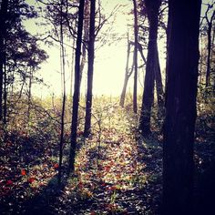 A walk in the woods #photography #spring #nature #instagram