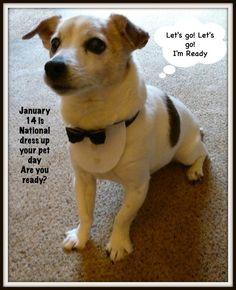 Tuxedo black bow tie dog collar  Bowdabra Blog