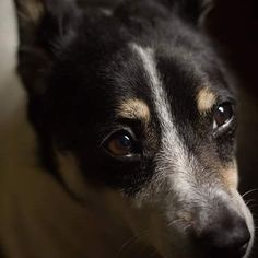 Ate a Luna tava pensativa hoje. Haha Ficou um tempo parada, filosofando. #picoftheday #dog #photo #instagood #instadailypic #vscobrasil #curitilover #sunday #rainingday #picturesofdogs #dogsofinstagram #cachorroétudodebom #olhares #pensamentos #olhoscastanhos #browneyes #eyes #fotografia #olhos #lady