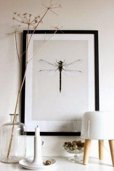 Mi Casa es Feng: El significado de las libélulas en el Feng Shui