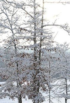 Cody Cookston - Snow Day V