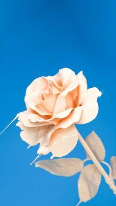 Tumblr Backgrounds, Wallpaper Backgrounds, Colorful Backgrounds, Cellphone Wallpaper, Iphone Wallpaper, Calming Colors, Lavender Roses, Rose Wallpaper, Christmas Background