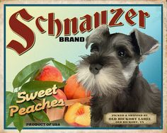 Miniature Schnauzer Small Wooden Crate by OldHickoryLabel on Etsy, $15.00