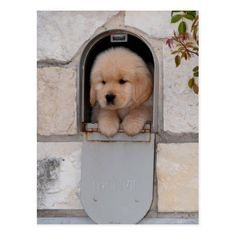 Golden Retriever puppy special delivery # Dogs and puppies Girl Dog Names: Hundreds Of Creative Ideas To Choose From Cute Dogs And Puppies, Baby Dogs, I Love Dogs, Doggies, Puppies Tips, Adorable Puppies, Pet Dogs, Cute Baby Animals, Funny Animals