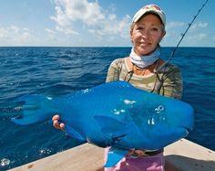Peixe-papagaio azul: encontrado no Oceano Atlântico e passa boa parte da vida (80%) atrás de alimento.