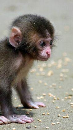 baby, cub, monkey