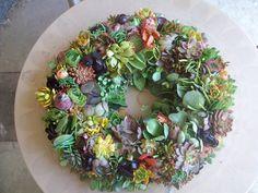 Echeveria Succulent Arrangement Living Wreath w/ Green Door Hanger