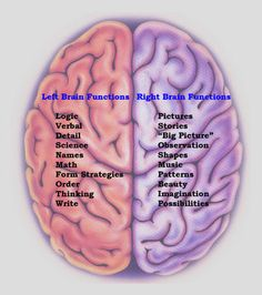 """Nine Stubborn Brain Myths That Just Won't Die, Debunked by Science. If you still believe """"you only use 10% of your brain"""", or you're either """"left-brained"""" or """"right-brained"""", please read."""