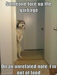 Nobody does guilty like a dog.