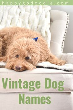 Noodling over an old fashioned name for your dog that's both vintage and cute? Here are 101 cute, old-timey girl dog names with a nostalgic, retro feel. Cute Grandma Names, Cute Dog Names Boy, Cute Girl Dog Names, Puppy Names, Yorkie Names Girl, Morkie Puppies, Yorkie Puppy, Cute Puppies, Cute Dogs