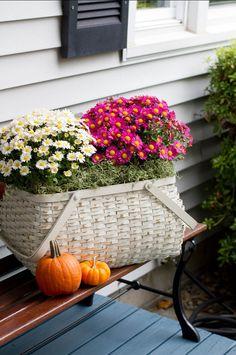 #Fall Flowers