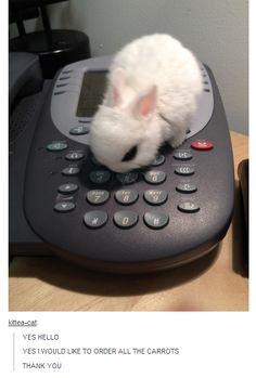 ALL the carrots!!! I want a bunnnyyyyyy!!!!