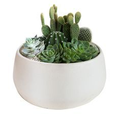 Oasis Ceramic Pot, planted with Succulents and Cactus