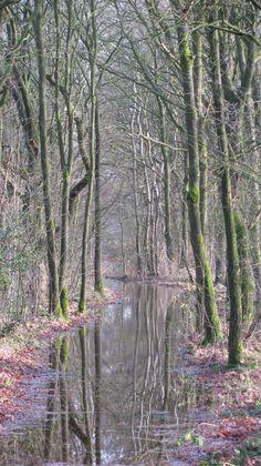 Bij Orvelte, Drenthe