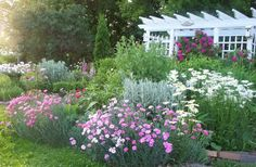 Missing My Summer Gardening...