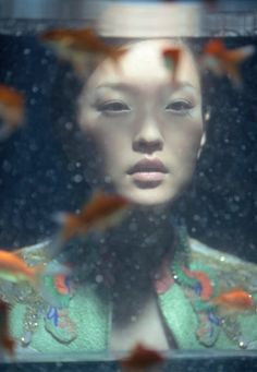 golden fishes in asia