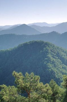 Places I've been - Troodos Mountains, Cyprus. Love in the forest!