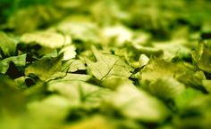 Green leaves close-up HD Wallpaper