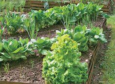 Organiser les cultures dans un carré potager Bonsai Styles, Permaculture Design, Little Gardens, Green Tips, Garden Terrarium, Aquaponics System, Aquaponics Diy, Hydroponics, Tips & Tricks