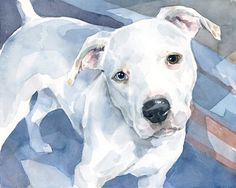 pitt bull watercolor painting | New dog watercolor portraits - pitbulls