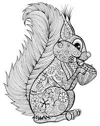 Hand drawn funny squirrel with nut for adult anti stress Coloring Page with high details isolated on white background, illustration in zentangle style. Free Adult Coloring Pages, Animal Coloring Pages, Printable Coloring Pages, Doodle Coloring, Colouring Pics, Coloring Books, Mandala Coloring, Mandalas Drawing, Mandala Art
