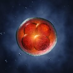 Genome editing reveals role of gene important for human embryo development. #stemcells #science