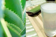 Poderoso Enxaguante Bucal Para Se Livrar do Mau Hálito Aloe Vera, Glass Of Milk, Plant Leaves, Health, Food, Remover, Fitness, Varicose Veins, Migraine