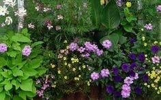 Annual Plants Should Be Part of Every Garden - Maria Planting Onions, Street Trees, Purple Tulips, Public Garden, Annual Plants, Garden Beds, Garden Plants, Types Of Plants, Cool Plants