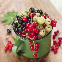 Currants and gooseberries, once prohibited in the U.S., are gaining popularity as state regulations loosen their grips.
