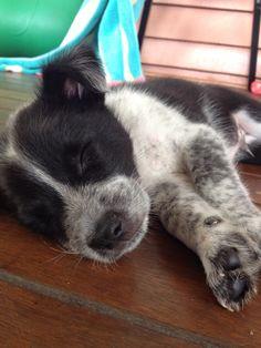 Cute little Sooty