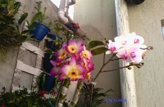 veja flores im 24
