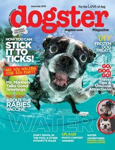 Another great find on Dogster Magazine Subscription Animal Magazines, Frozen Dog, New Print, Dog Walking, Dog Photos, All Dogs, Puppy Love, The Help, Your Pet