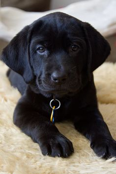 When I am sad I look at pictures of Labrador Puppies and reassure myself that the world is good!
