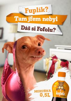 Kofola meruňková: Dáš si Fofolu? | Národní galerie reklamy Tuna Dog, Entertaining, My Favorite Things, Celebrities, Funny, Dogs, Animals, Google, Photos