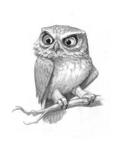 Sam's Tasty Art: Pygmy Owl