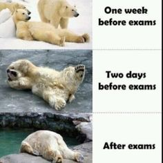 Funny pictures about Exam stages. Oh, and cool pics about Exam stages. Also, Exam stages photos. Exams Memes, Exams Funny, Exam Humor, The Meta Picture, Funny Quotes, Funny Memes, Funny Ads, Funny Humour, Funny Internet Memes