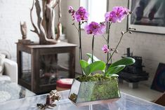How To Care For An Orchid Arrangement