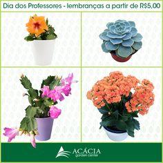 Hibisco - Hibiscus Rosa de Pedra - Echeveria Flor de Maio - Schlumbergera truncata Kalanchoe - Flor da fortuna  (valores de setembro de 2013)
