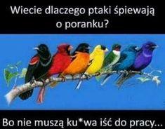 Best Memes, True Stories, Lol, Bird, Funny, Happy, Fotografia, Best Memes Ever, Birds