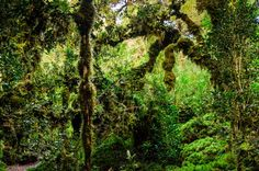 Sendero del Bosque Encantado, Parque Nacional Queulat Chile, Landscapes, Nature, Plants, Haunted Forest, Forests, National Parks, You Are Awesome, People