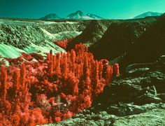 Infrared Landscape Photos by Reuben Wu.    Reuben shoots on discontinued Aerochrome Infrared film on a Mamiya RZ67.