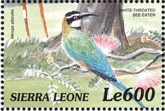 White-throated Bee-eater stamps - mainly images - gallery format