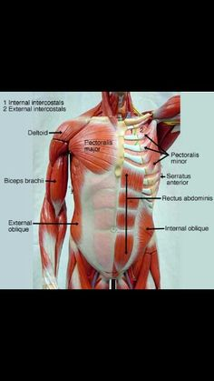 Found on google search engine I typed anatomy and physiology images labeled
