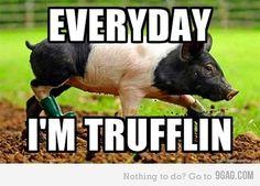 Everyday I'm Trufflin