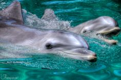 I still needs to swim with a dolphin....on the bucket list!