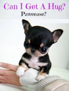 Omg so cute!!!!!! This is PAWSOME! No.....okay sorry