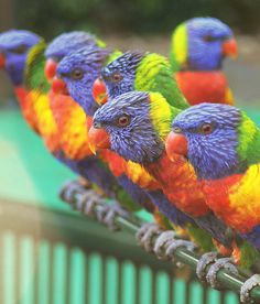 The beautiful, amazing, cool and colorful birds makes our world beautiful. The birds have large variety of color combination according to their natural habitat. Kinds Of Birds, All Birds, Love Birds, Colorful Animals, Colorful Birds, Cute Animals, Colorful Parrots, Colorful Feathers, Wild Animals