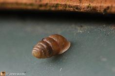Ce mini-escargot se déplace avec sa coquille dressée vers le haut